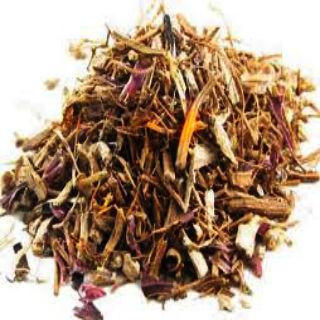 echinacea wortel